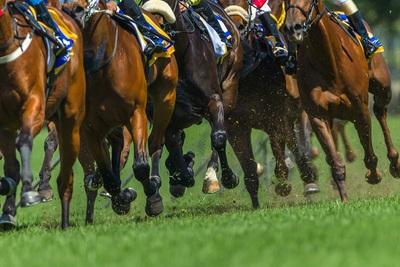 Horses Hooves Going 400