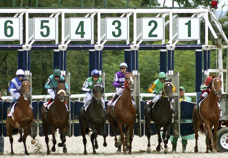 Horse Race Start Gate