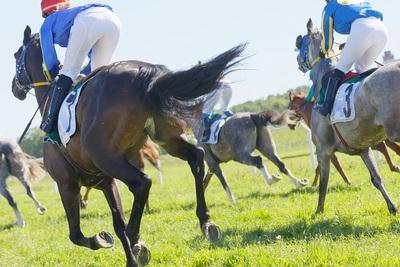 Turf Track Horse Race