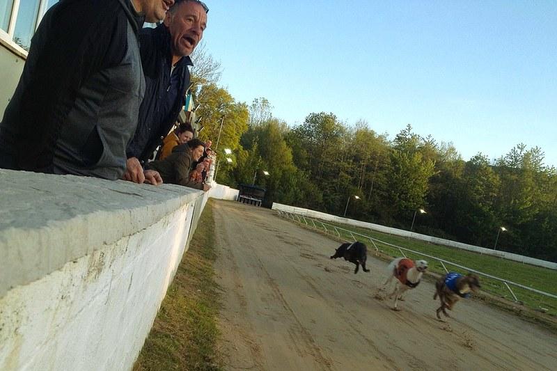 Greyhound Crowd