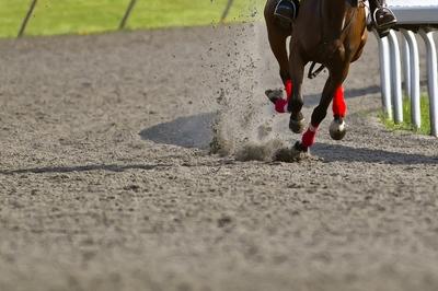 Horse Racing Dirt Track