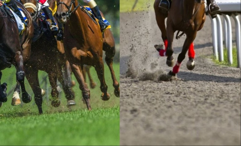 Horse Racing Track Surfaces