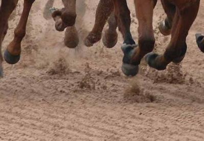 Horses Feet Fibresand