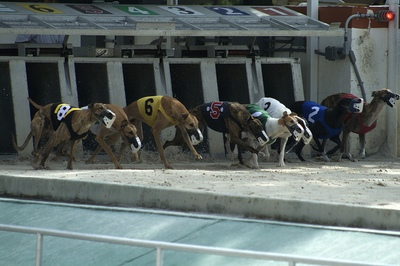 Greyhound Race Traps Open