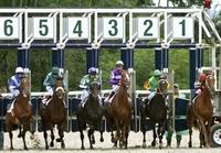 Horse Race Draw