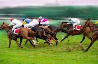 Horse race Runners