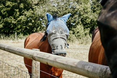Horse Disguise