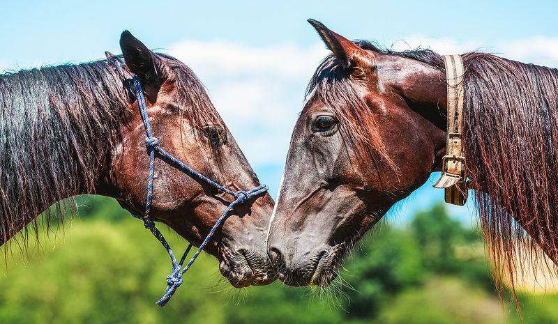 Two Similar Racehorses