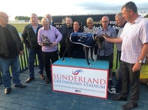 Classic Sunderland Greyhound