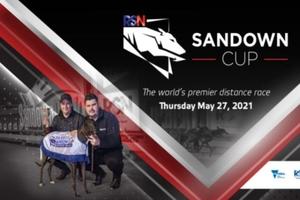 Sandown Cup Greyhound