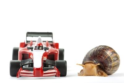 F1 Snail